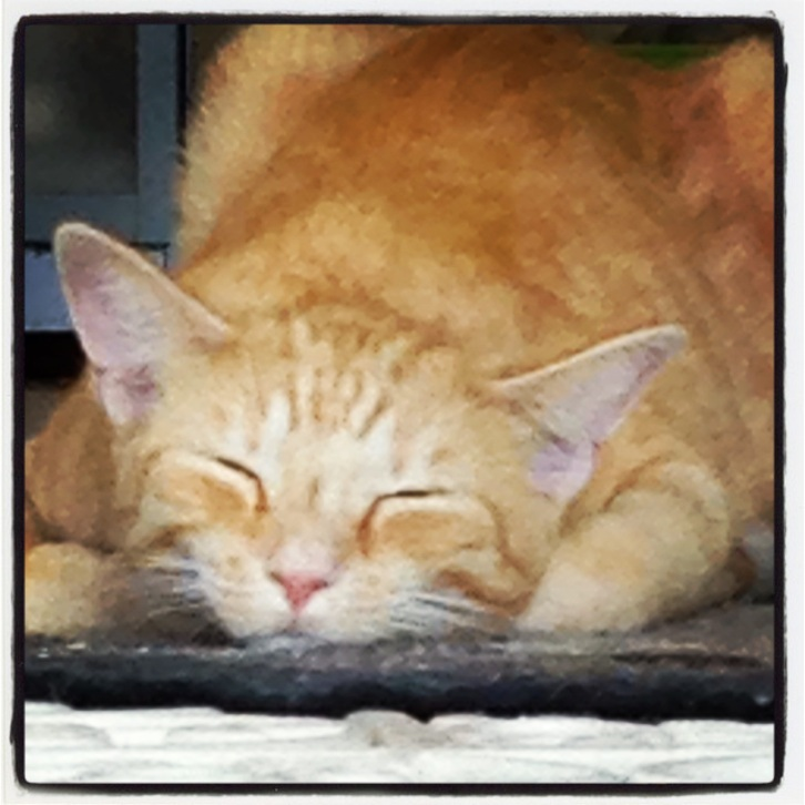 chalkhillhouse sleeping ginger cat