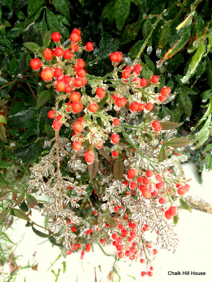chalk hill house winter ice storm nandina red berries in snow