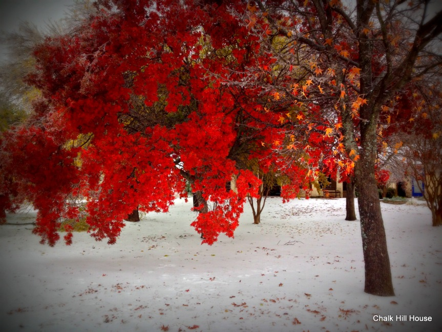 chalkhillhouse winter ice storm flame red leaves